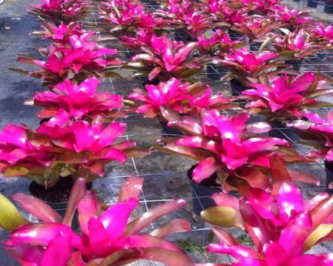 Burlington MA Social Distancing Barriers using Interior office Plants & Planters