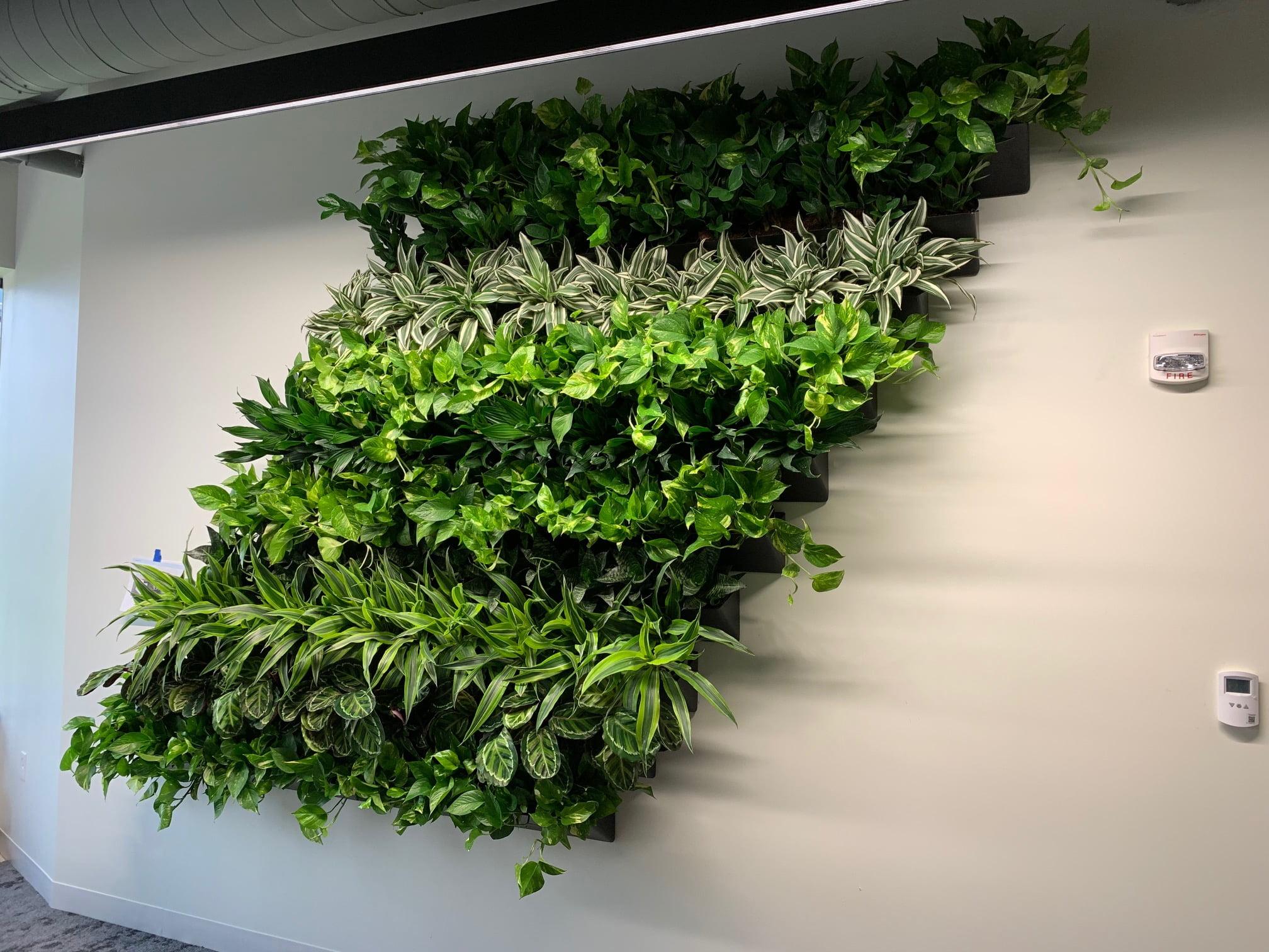 Living Wall Burlington MA