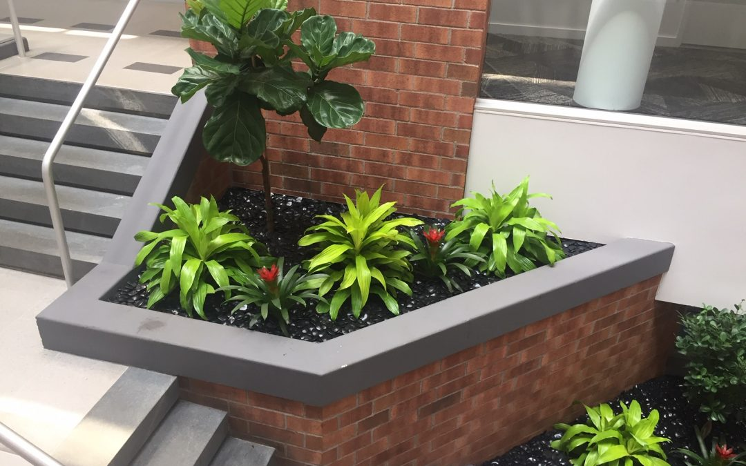 How to redesign your corporate planter with Plantscape Designs Inc 46 Years of Experience Massachusetts