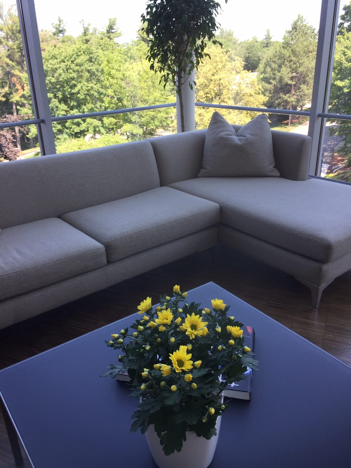 Plantscape Designs Inc : Mimecast Lobby Flowering Programs