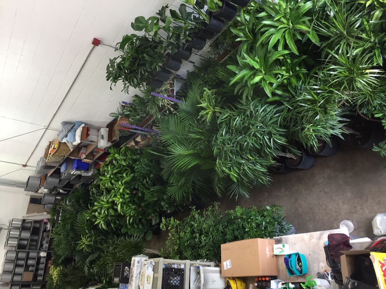 Clean-air-interior-office-plants-humidity