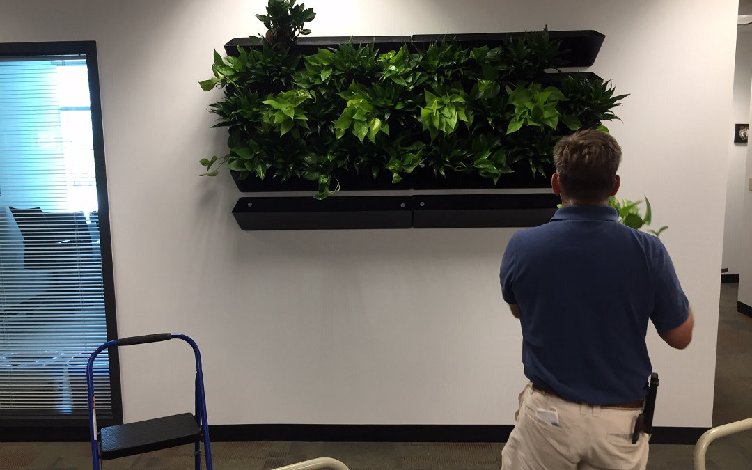 Corporate Interior Plants and Service Before and After Plantscape Designs Inc Botanical Composition.