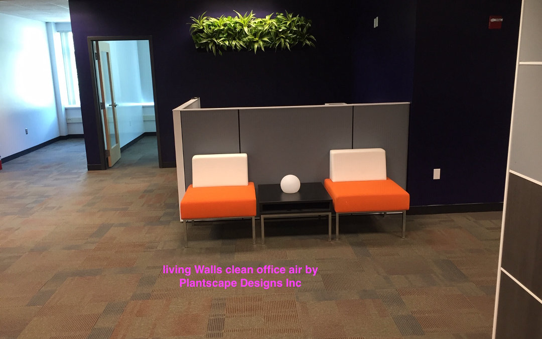 Office Plants Beautify Your Corporate Office as Well as Clean Your Air Bedford MA