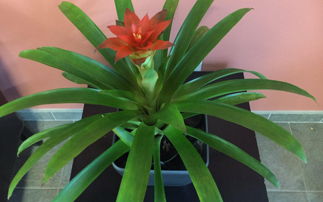 Plantscape Designs Inc Partners with Cambridge Massachusetts Luxury Apartments , Interior Landscaping.
